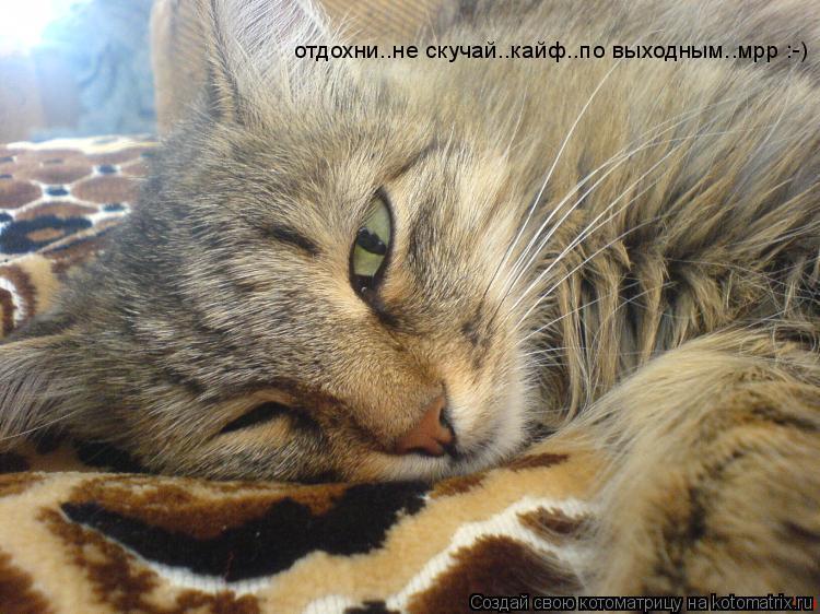 Котоматрица: отдохни..не скучай..кайф..по выходным..мрр :-)