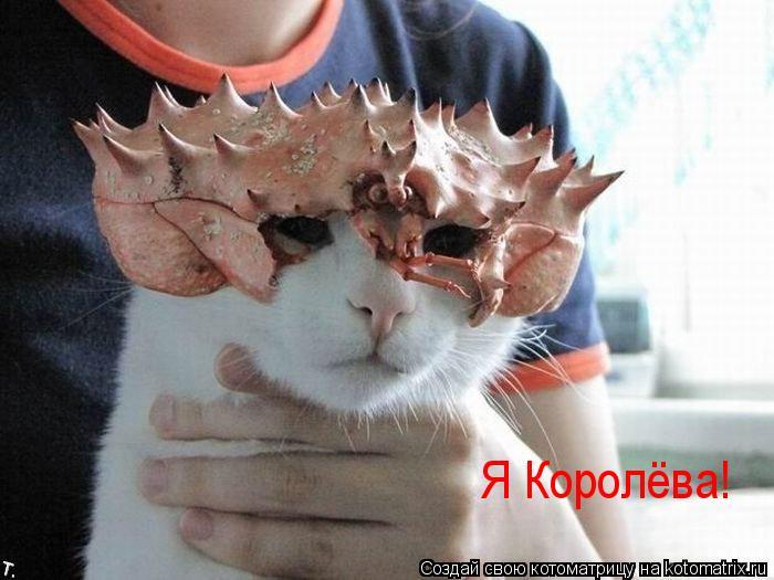 Котоматрица: Я Королёва!