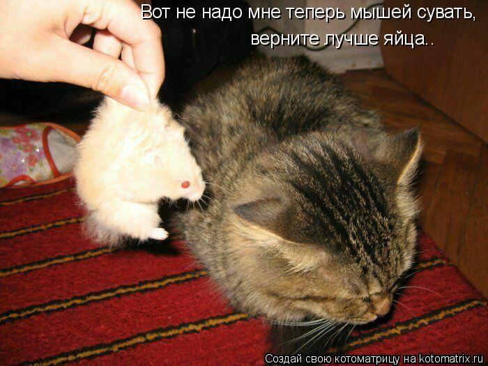 Котоматрица: Вот не надо мне теперь мышей сувать,  верните лучше яйца..