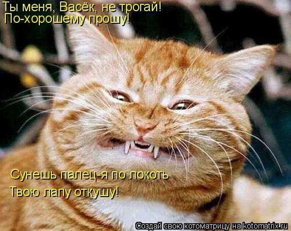 Котоматрица: Ты меня, Васёк, не трогай!  По-хорошему прошу! Сунешь палец-я по локоть Твою лапу откушу!