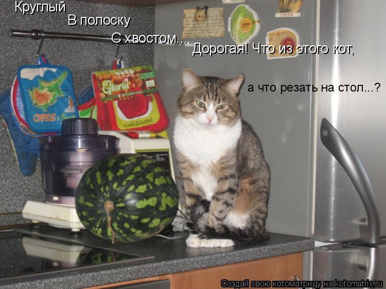 Котоматрица: Круглый В полоску С хвостом.... Дорогая! Что из этого кот,  а что резать на стол...?