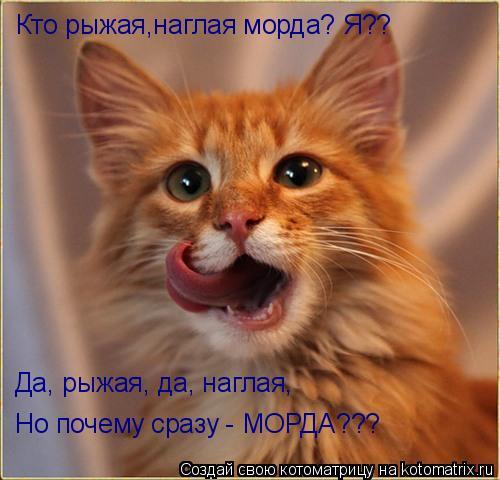 Котоматрица: Кто рыжая,наглая морда? Я?? Да, рыжая, да, наглая,  Но почему сразу - МОРДА???