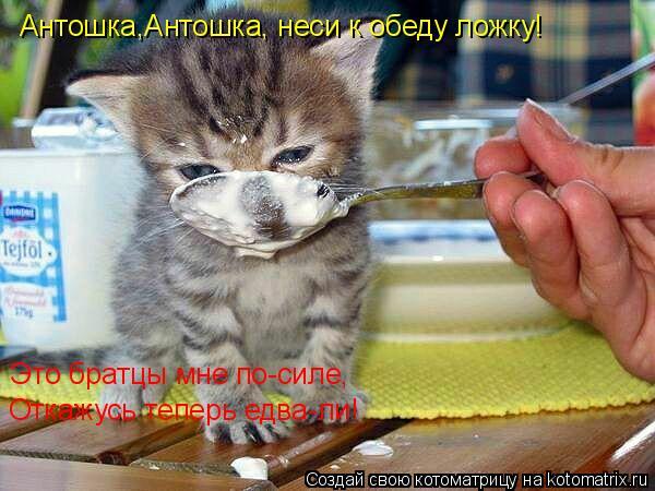 Котоматрица: Антошка,Антошка, неси к обеду ложку! Это братцы мне по-силе,  Откажусь теперь едва-ли!
