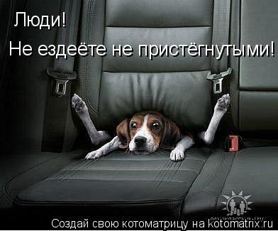 Котоматрица: Люди!  Не ездеёте не пристёгнутыми!