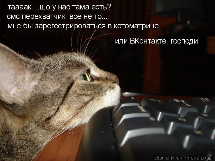 Котоматрица: таааак....шо у нас тама есть? смс перехватчик, всё не то... мне бы зарегестрироваться в котоматрице... или ВКонтакте, господи!