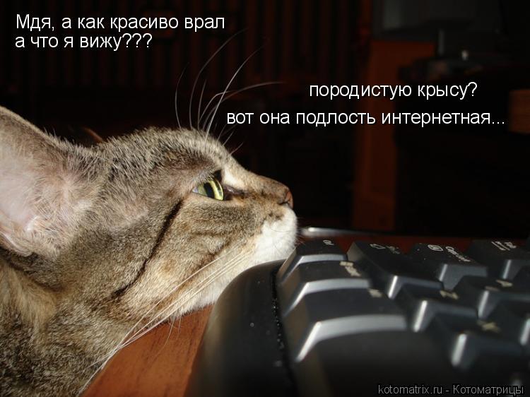 Котоматрица: Мдя, а как красиво врал а что я вижу??? породистую крысу? вот она подлость интернетная...