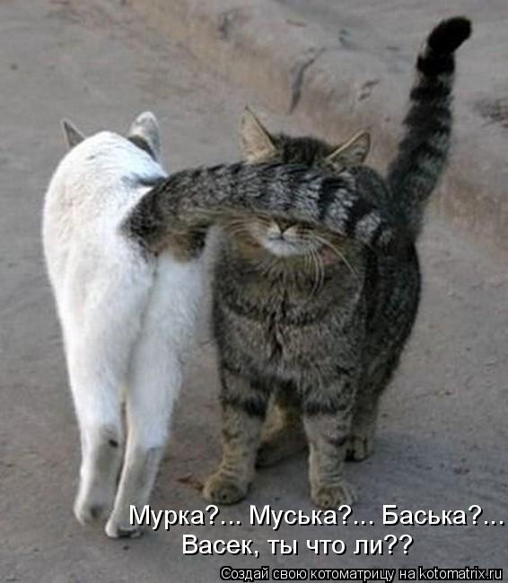 Котоматрица: Мурка?... Муська?... Баська?... Васек, ты что ли??