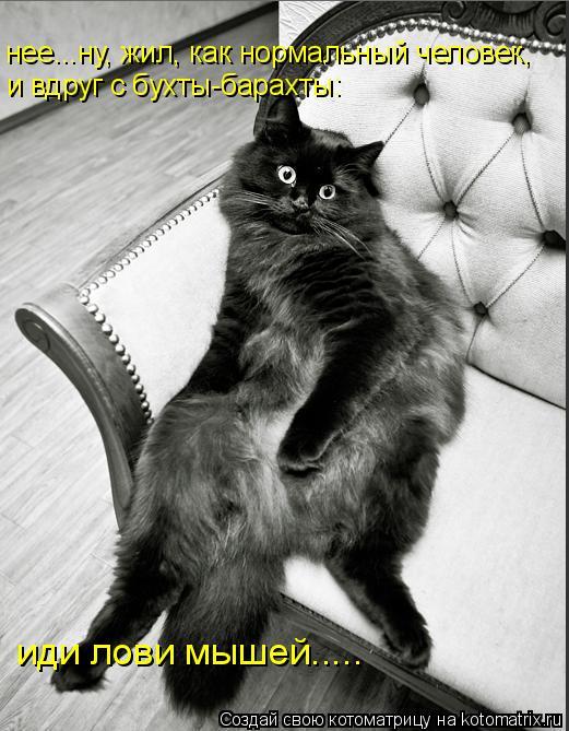 нее...ну, жил, как нормальный человек, и вдруг с бухты-барахты: иди лови мышей.....