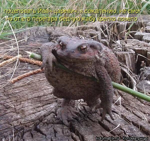 Котоматрица: но от его перегара бедную жабу крепко повело поцеловать Иван-царевич, к сожалению, не смог.