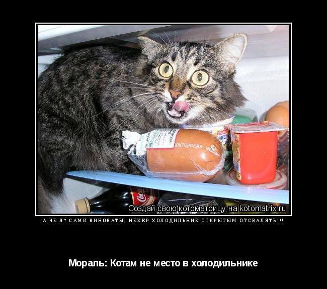 Котоматрица: А че я? Сами виноваты, нехер холодильник открытым отсвалять!!! Мораль: Котам не место в холодильнике