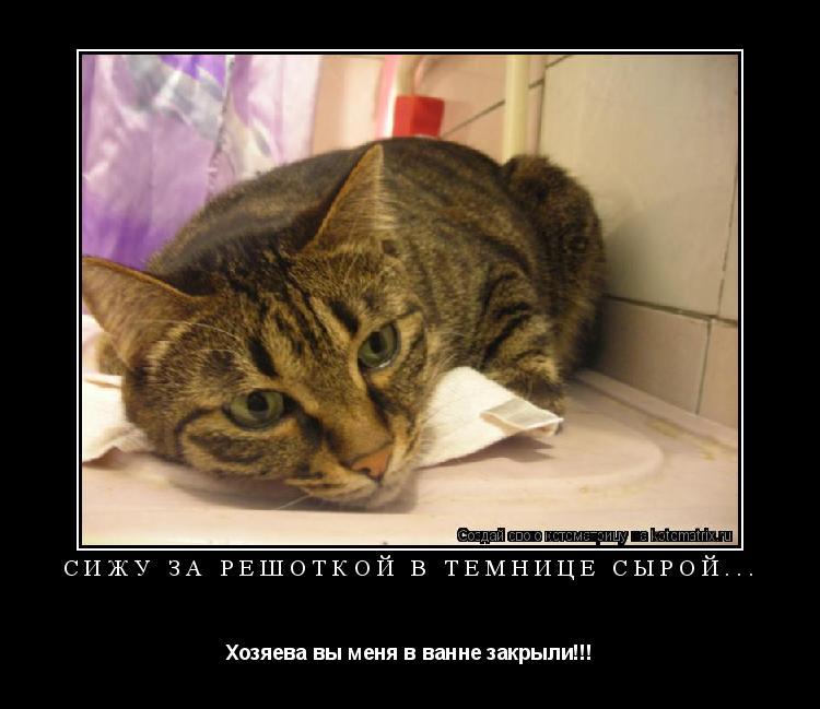 Котоматрица: Сижу за решоткой в темнице сырой... Хозяева вы меня в ванне закрыли!!!