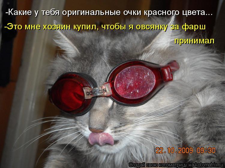 Котоматрица: -Какие у тебя оригинальные очки красного цвета... -Это мне хозяин купил, чтобы я овсянку за фарш  принимал