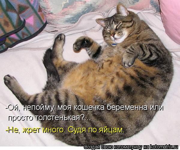 Котоматрица: -Ой, непойму, моя кошечка беременна или  просто толстенькая?... -Не, жрет много. Судя по яйцам.