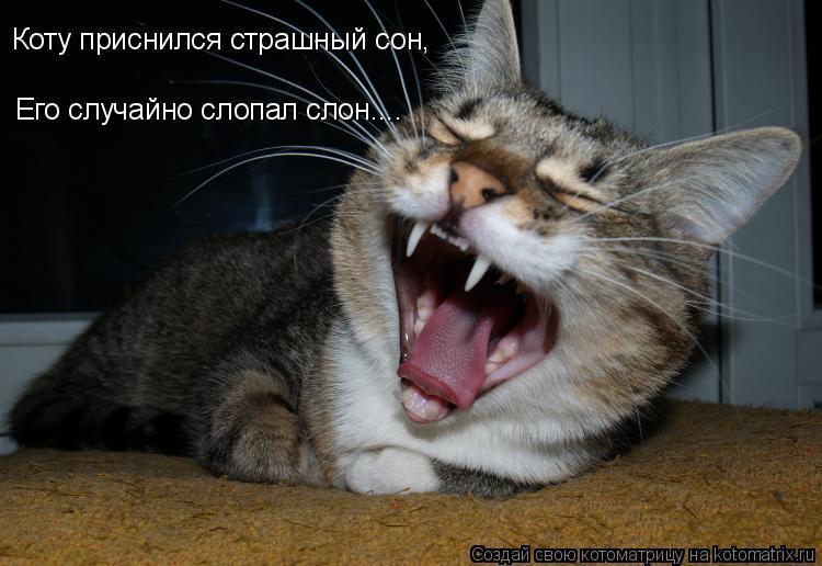Котоматрица: Коту приснился страшный сон, Его случайно слопал слон....