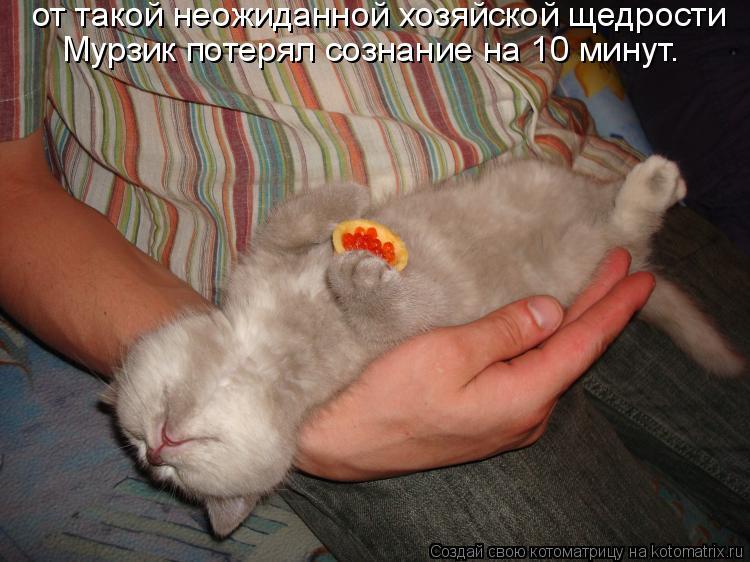 Котоматрица: от такой неожиданной хозяйской щедрости  Мурзик потерял сознание на 10 минут.
