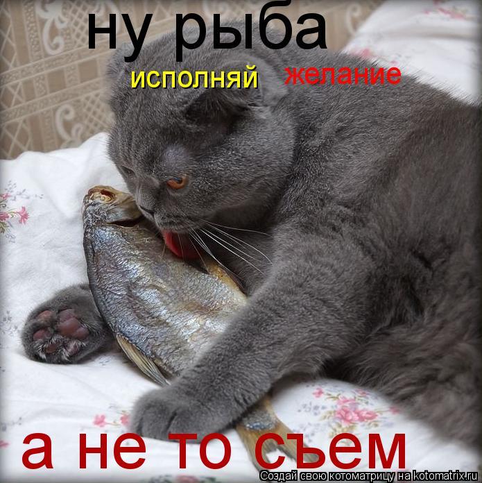 Котоматрица: ну рыба исполняй  желание а не то съем