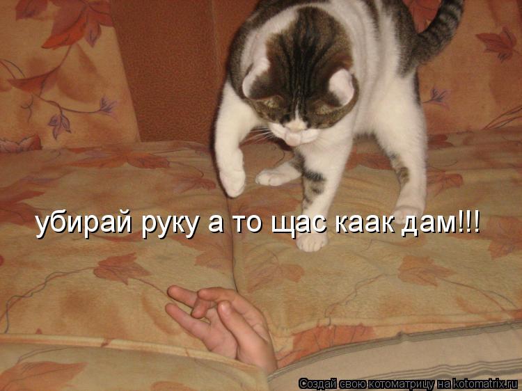 Котоматрица: убирай руку а то щас каак дам!!!