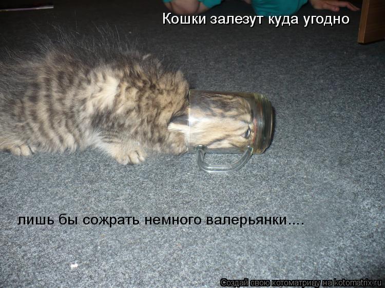 Котоматрица: Кошки залезут куда угодно лишь бы сожрать немного валерьянки....