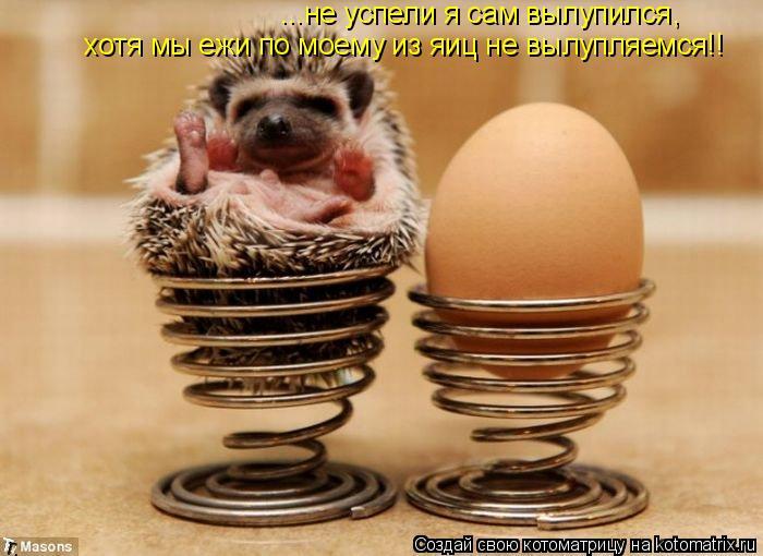 Котоматрица: ...не успели я сам вылупился хотя мы ежи по моему из яиц не вылупляемся!! ,