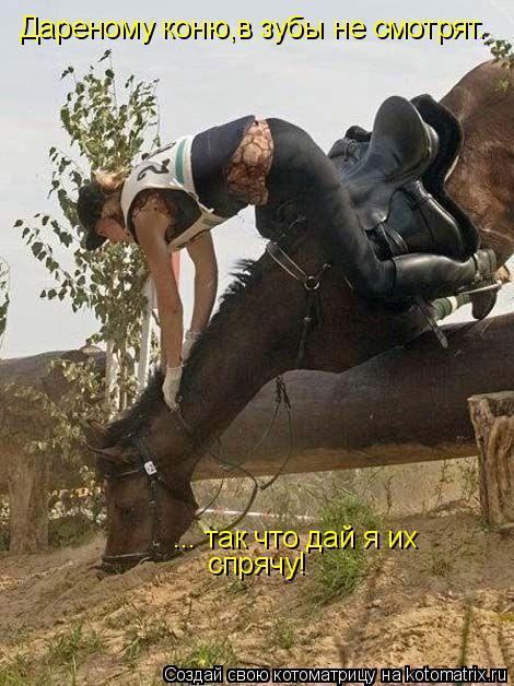 Котоматрица: Дареному коню,в зубы не смотрят. ... так что дай я их спрячу!