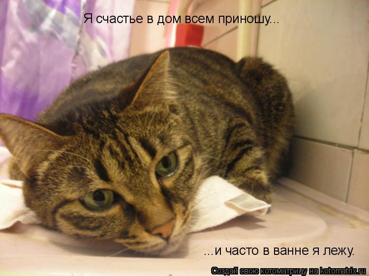 Котоматрица: Я счастье в дом всем приношу... ...и часто в ванне я лежу.