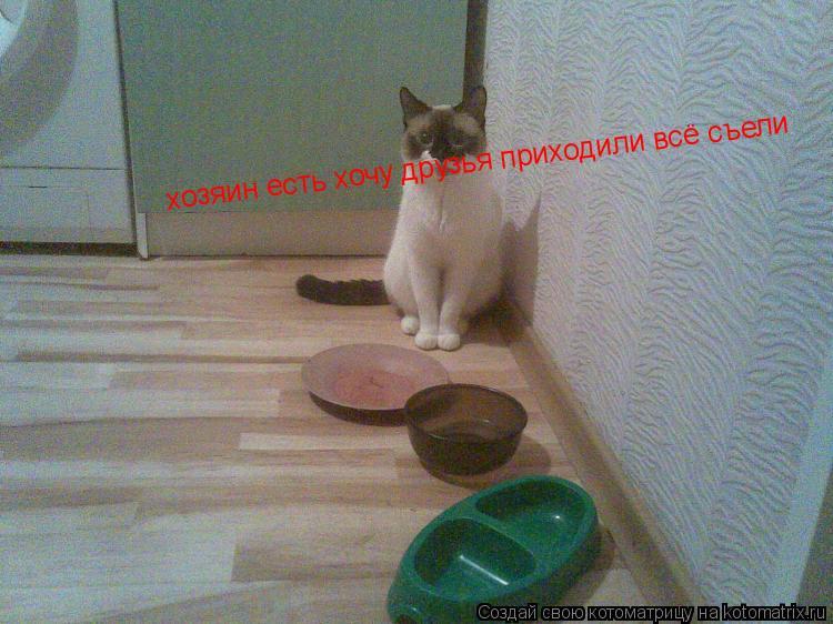 Котоматрица: хозяин есть хочу друзья приходили всё съели