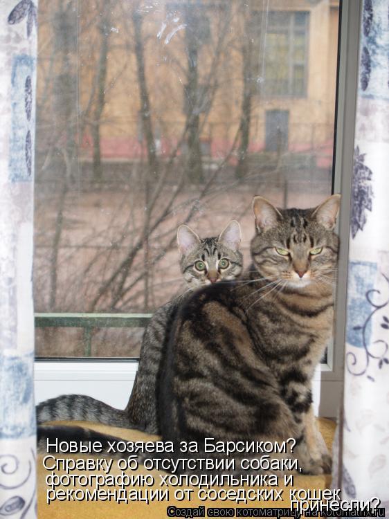 Котоматрица: Новые хозяева за Барсиком? Справку об отсутствии собаки, фотографию холодильника и  рекомендации от соседских кошек принесли?