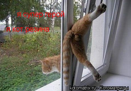 Котоматрица: я супер герой  я кот резина