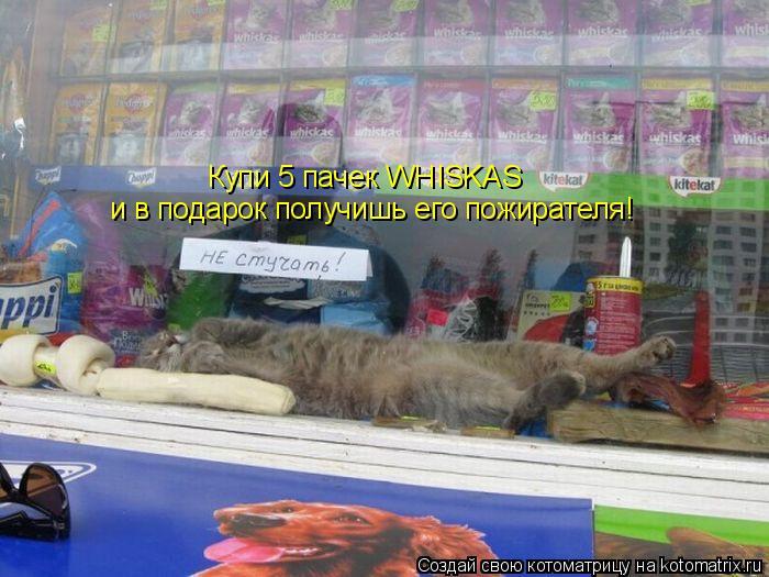 Котоматрица: Купи 5 пачек WHISKAS и в подарок получишь его пожирателя!