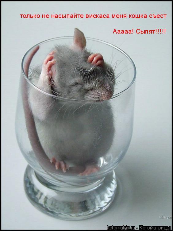 Котоматрица: только не насыпайте вискаса меня кошка съест Ааааа! Ааааа! Сыпят!!!!!
