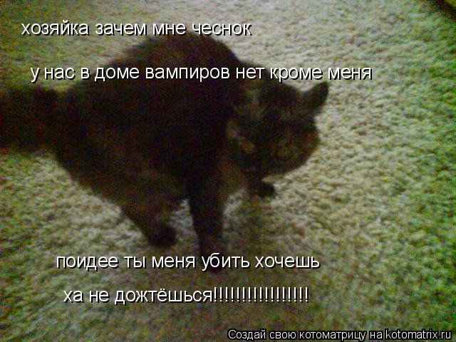 Котоматрица: хозяйка зачем мне чеснок у нас в доме вампиров нет кроме меня поидее ты меня убить хочешь ха не дожтёшься!!!!!!!!!!!!!!!!!