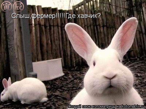 Котоматрица: Слыш,фермер!!!!!Где хавчик?