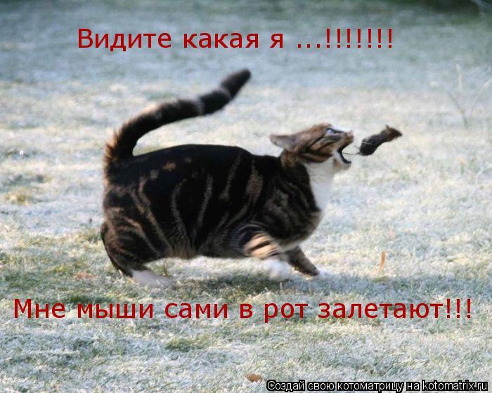 Котоматрица: Видите какая я ...!!!!!!! Мне мыши сами в рот залетают!!!