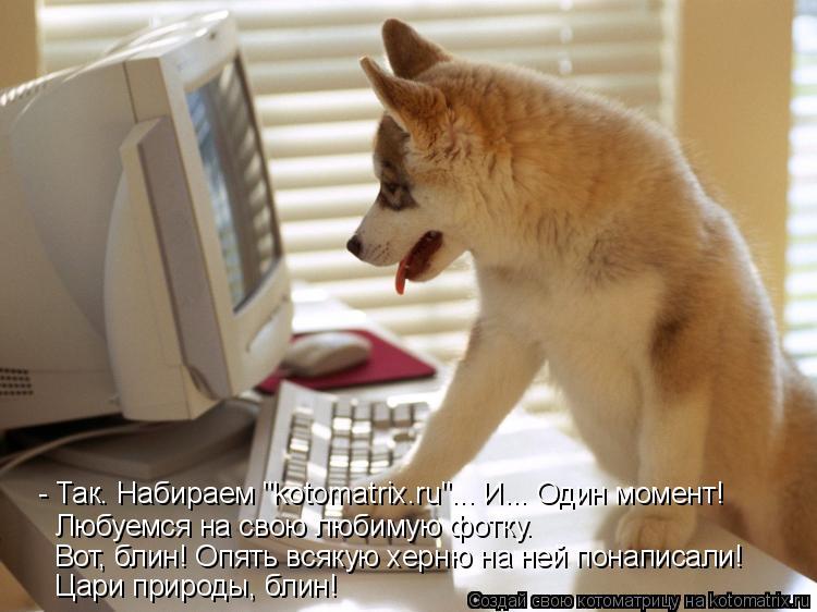 """Котоматрица: - Так. Набираем """"kotomatrix.ru""""... И... Один момент! Любуемся на свою любимую фотку. Вот, блин! Опять всякую херню на ней понаписали! Цари природы, бл"""