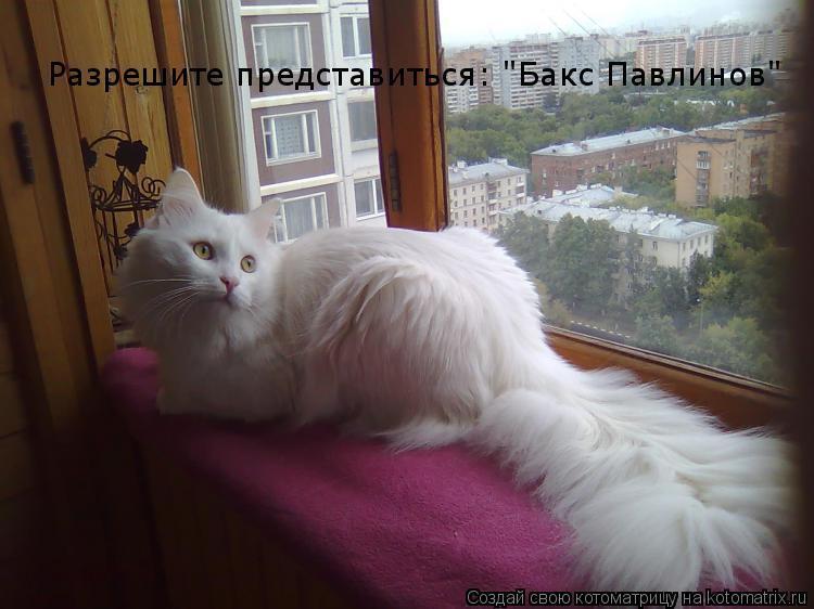 "Котоматрица: Разрешите представиться: ""Бакс Павлинов"""