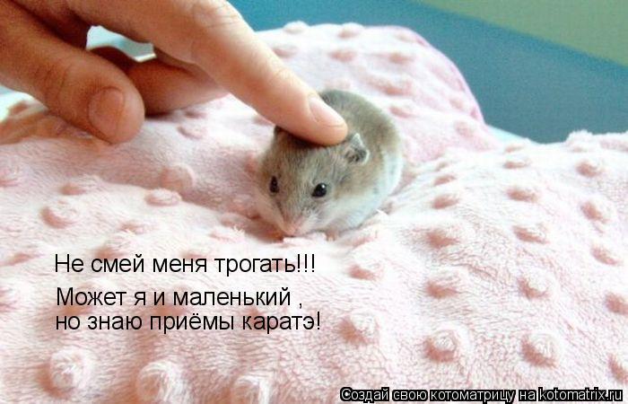 Котоматрица: Не смей меня трогать!!! Может я и маленький , но знаю приёмы каратэ!