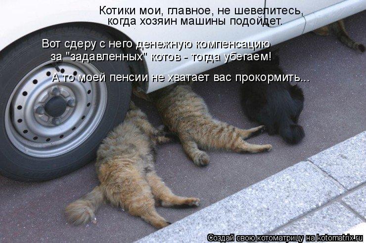 """Котоматрица: когда хозяин машины подойдет. Вот сдеру с него денежную компенсацию   за """"задавленных"""" котов - тогда убегаем! Котики мои, главное, не шевелите"""