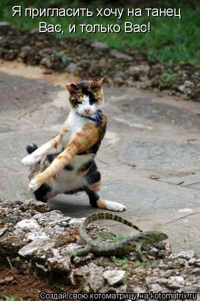Котоматрица: Я пригласить хочу на танец Вас, и только Вас!