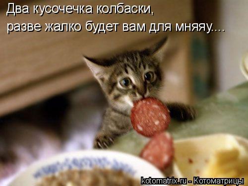 Котоматрица: Два кусочечка колбаски, разве жалко будет вам для мняяу....