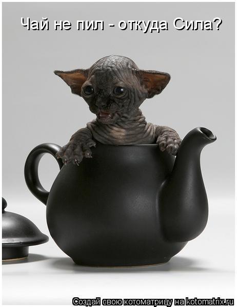 Котоматрица: Чай не пил - откуда Сила?