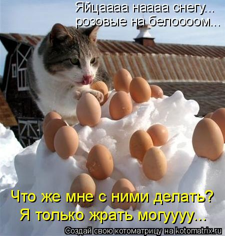 Котоматрица: розовые на белоооом... Яйцаааа наааа снегу... Что же мне с ними делать?  Я только жрать могуууу...