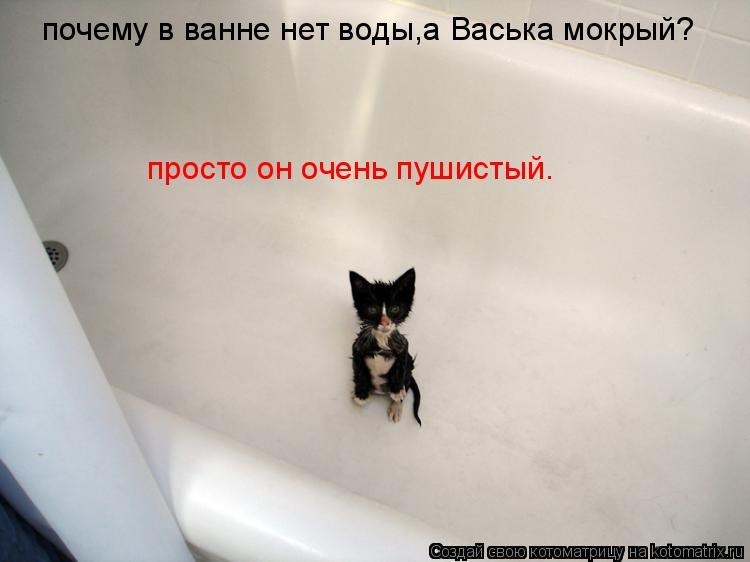 Котоматрица: почему в ванне нет воды,а Васька мокрый? просто он очень пушистый.