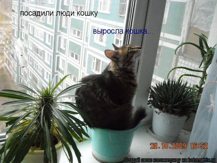 Котоматрица: посадили люди кошку выросла кошка...
