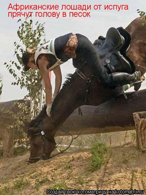 Котоматрица: Африканские лошади от испуга прячут голову в песок