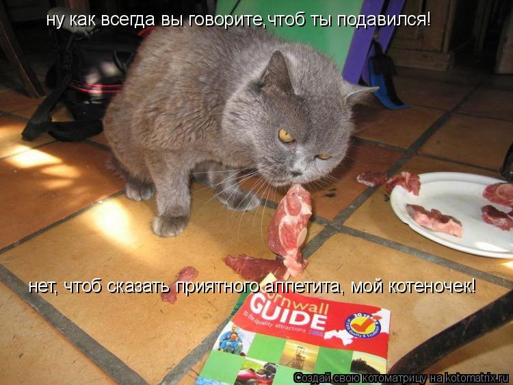 Котоматрица: ну как всегда вы говорите,чтоб ты подавился! нет, чтоб сказать приятного аппетита, мой котеночек!