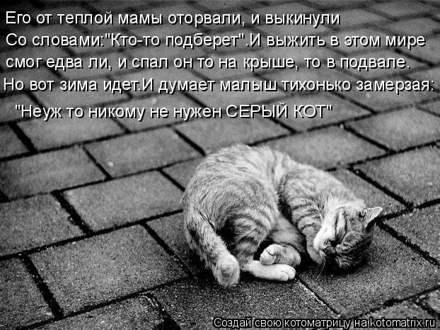 """Котоматрица: Со словами:""""Кто-то подберет"""".И выжить в этом мире Его от теплой мамы оторвали, и выкинули смог едва ли, и спал он то на крыше, то в подвале. Но в"""