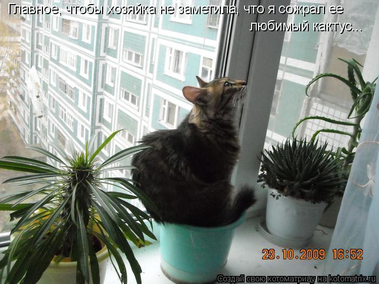 Котоматрица: Главное, чтобы хозяйка не заметила, что я сожрал ее любимый кактус...