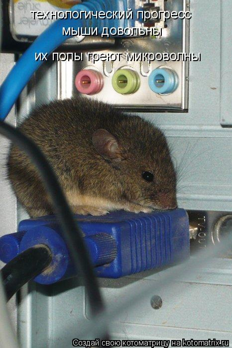 Котоматрица: технологический прогресс мыши довольны их попы греют микроволны
