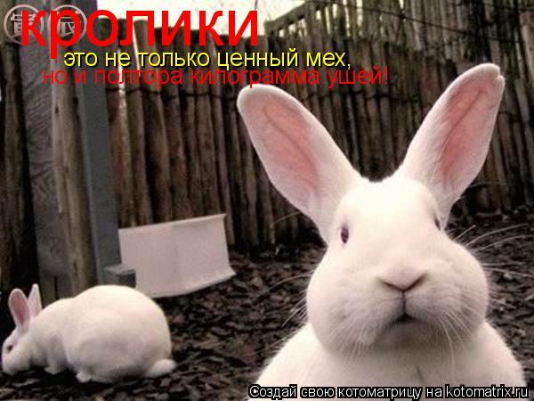 Котоматрица: кролики это не только ценный мех, но и полтора килограмма ушей!