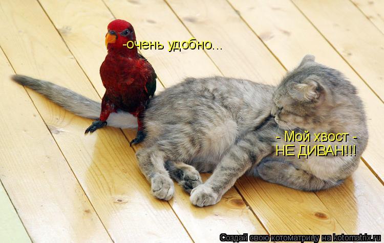 Котоматрица: - Мой хвост -  НЕ ДИВАН!!! -очень удобно...